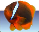 Buy Products for Aquariums