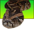 Buy Products for Reptiles