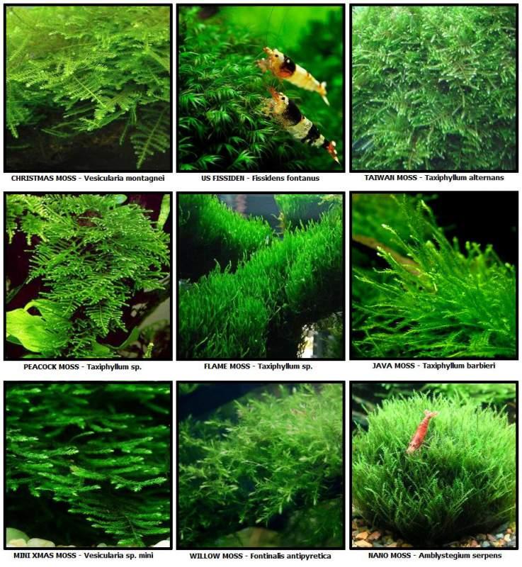 Plants, Price , Photo Various Aquatic Plants, from Aquadisiac Aquarium ...