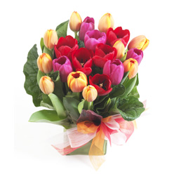 Buy Tulips in Glass Cube