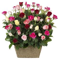 Buy Basket of Coloured Roses