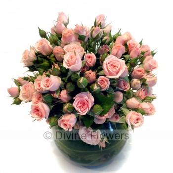 Buy Manhattan Tea Roses