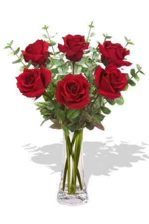 Buy 6 Long Stem Premium Rose Bouquet