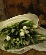 Buy Tulip Bouquet