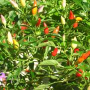 Buy Our Range of Herbs