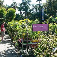 Buy Range of Fruit Trees