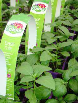 Buy Easy Colour Herbs and Veg