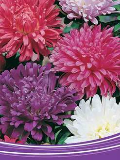 Buy Punnet Flowers Range