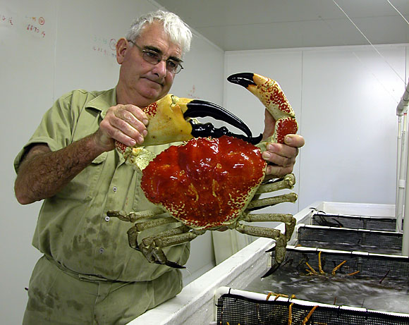 Giant King Crabs Giant King Crab