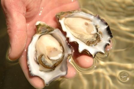 Buy Australian Oysters