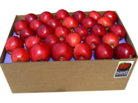Buy Fresh Organic Apples