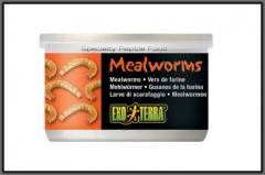 Food Canned Mealworms