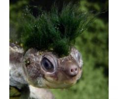 An Irwin's Turtle