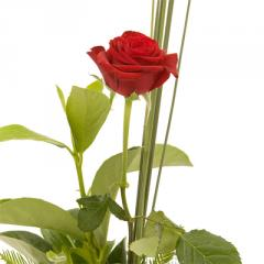 Stemmed Red Rose, R1 The One