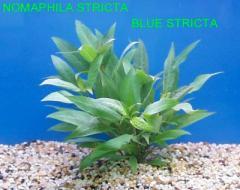 Various Aquatic Plants