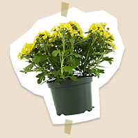 Garden Plants and Accessories