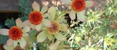 Seeds, Plants & Shrubs