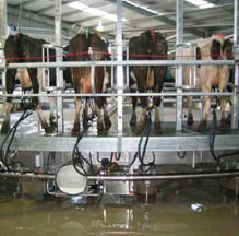 Rotary Milking System