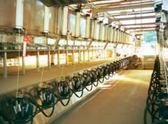 Milking System 20-a-side