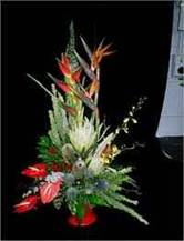 Flamboyant Tropical Arrangement