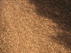 Bark Pine 15mm Mulches