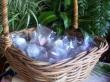Bath Fizz Bomb (Lavender)