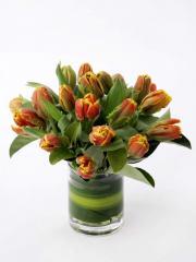 Tulipa Arrangement