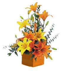 Asiatic Art Lillies
