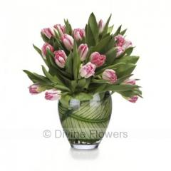 Pink Tulips 20 Stems