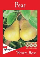 'Beurre Bosc' Pear
