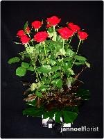 Flirtatious Roses