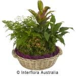 Basket of various potted indoor plants