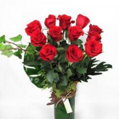 Temptation Roses