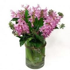 Think Pink Hyacinth