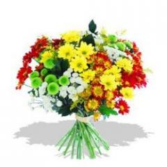 Mixed Chrysanthemums