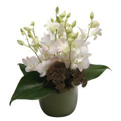Ceramic Pot of Singapore Orchids