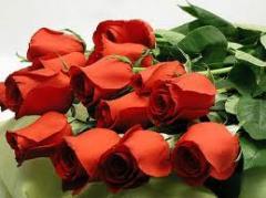 The Romantic Roses