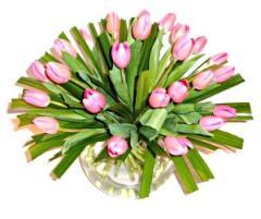 Tulips, Tulips, Tulips