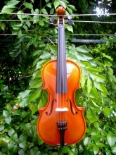 """""""Amore"""" Violin, available in"""