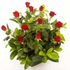 Roses - Box of Love