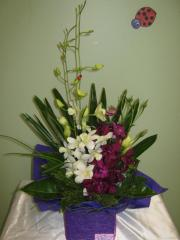 Asian Accent Orchids
