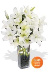 Elegant Ivory Lilies