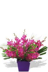 Curious Orchids