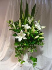 Elegance Lilies