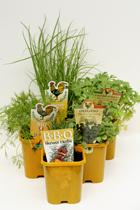 Winter Specials 5 x Herbs