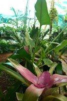 Palms, Cycads, Ferns, Bamboo, Tropical Foliage