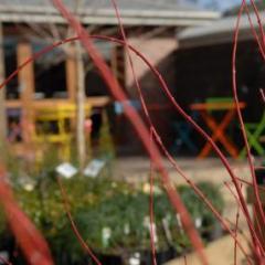 Vision Gardens Nursery