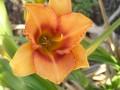 Kyooma Janice Marleen Flower