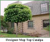 The Designer Mop Top