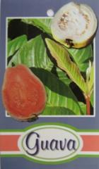 Our Guava Tree Range